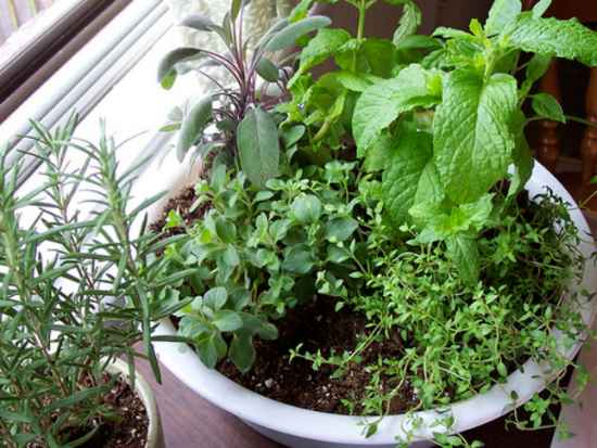 3-best-ways-to-grow-food-indoors