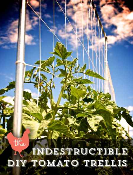4-diy-garden-trellis-projects