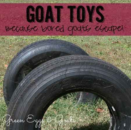 6-toys-for-goats-to-keep-them-busy