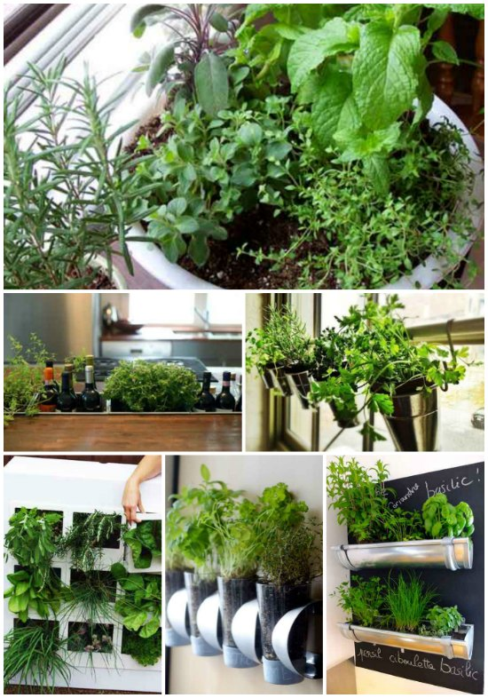 best-ways-to-grow-food-indoors