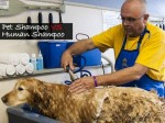 3 Essential Differences Between Pet Shampoo And Human Shampoo