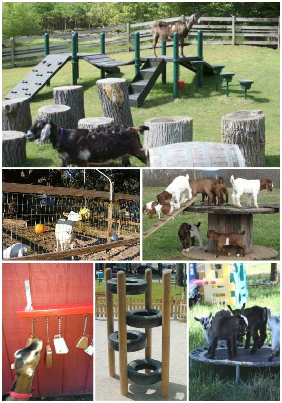 18 DIY Toys For Goats To Keep Them Busy