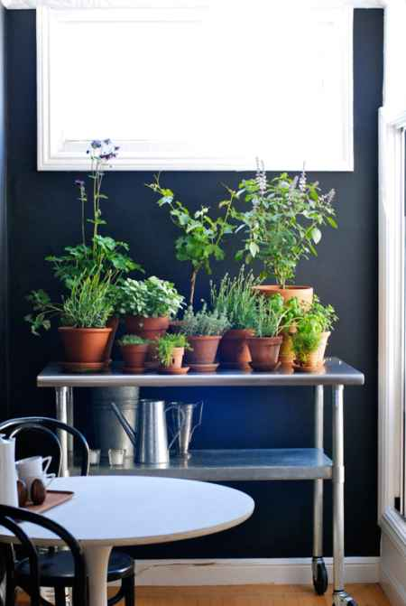 10-best-ways-to-grow-food-indoors
