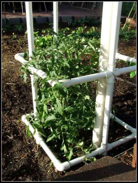 11-diy-tomato-cages