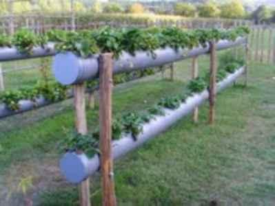 11-gutter-garden-ideas-and-designs