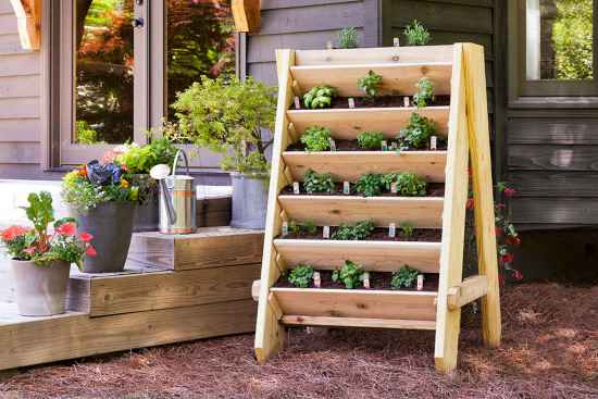 12-garden-plants-to-grow-vertically-this-year