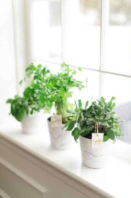 13-best-ways-to-grow-food-indoors