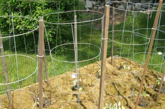 13 make your own tomato cages by using some chicken wire