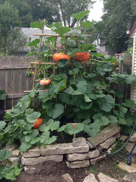 13-garden-plants-to-grow-vertically-this-year