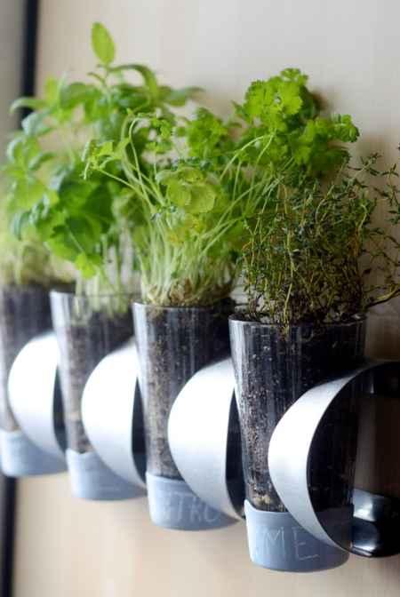 Best Ways Grow Food Indoors