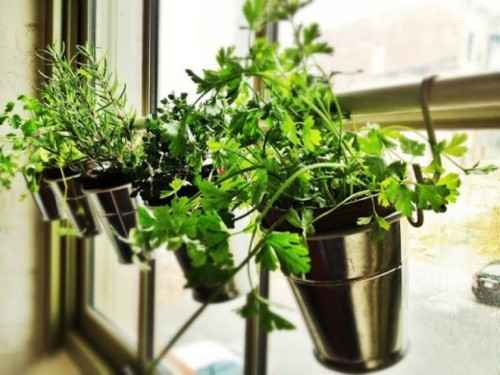 17-best-ways-to-grow-food-indoors
