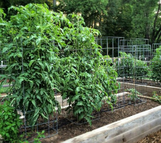 18 Diy Tomato Cages For Your Garden