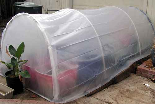 2-best-greenhouses-that-won't-break-your-budget
