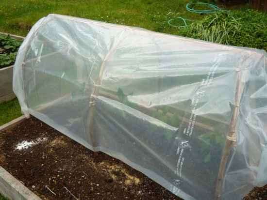 3-best-greenhouses-that-won't-break-your-budget