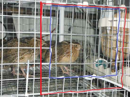 3-diy-quail-hutch-ideas-and-designs