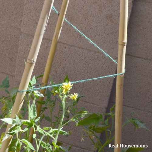 3-diy-tomato-cages