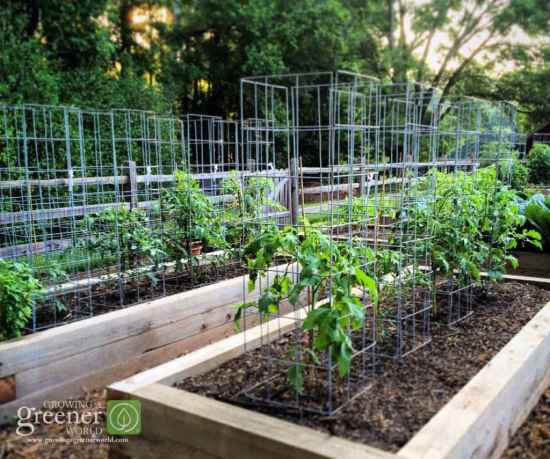 4-garden-plants-to-grow-vertically-this-year