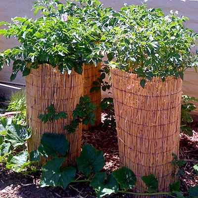 5-garden-plants-to-grow-vertically-this-year