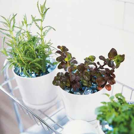 6-best-ways-to-grow-food-indoors