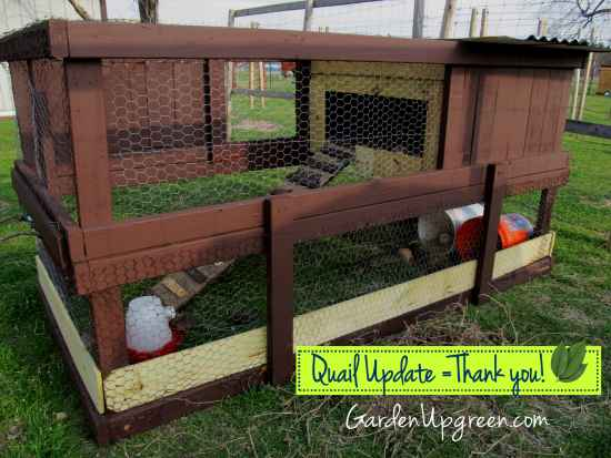 6-diy-quail-hutch-ideas-and-designs