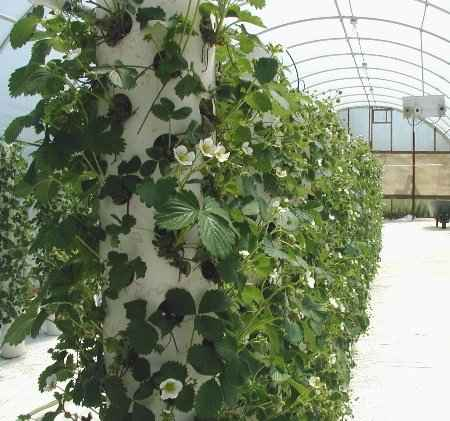6-garden-plants-to-grow-vertically-this-year