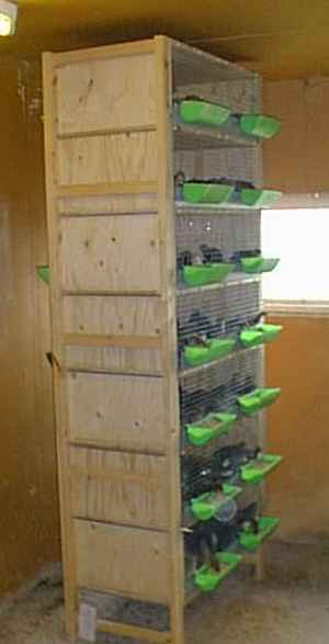7-diy-quail-hutch-ideas-and-designs
