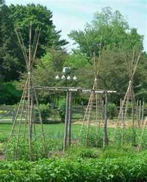 8-diy-tomato-cages