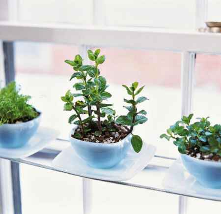 9-best-ways-to-grow-food-indoors