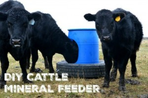 animal-mineral-feeder