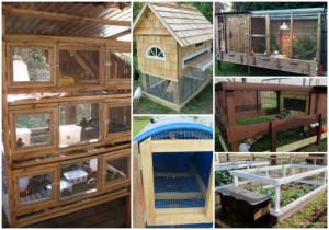 18 DIY Quail Hutch Ideas And Designs