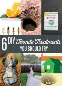 6 DIY Termite Treatments For The Home