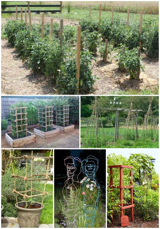 diy-tomato-cages