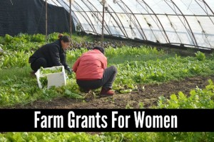 Acquiring Farm Grants For Women