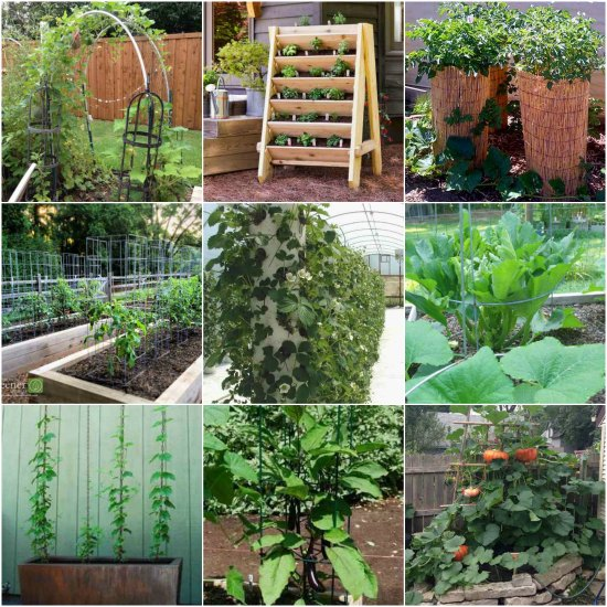 garden-plants-to-grow-vertically-this-year