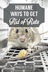 How To Get Rid Of Mice Humanely