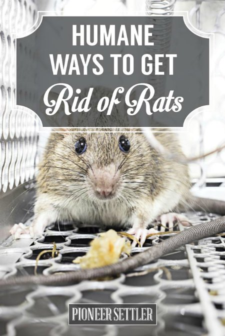 get-rid-of-mice-humanely