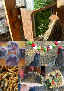 25 Homemade Healthy Treats For Chickens
