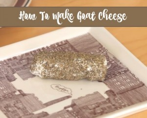 Learn How To Make Goat Cheese