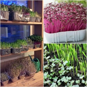 indoor-gardening-shelf-for-year-round-gardening