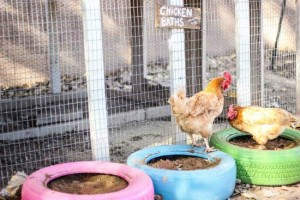 How To Repurpose Old Tires Into Chicken Baths