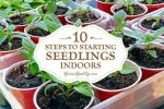 10 Steps To Starting Seedlings Indoors