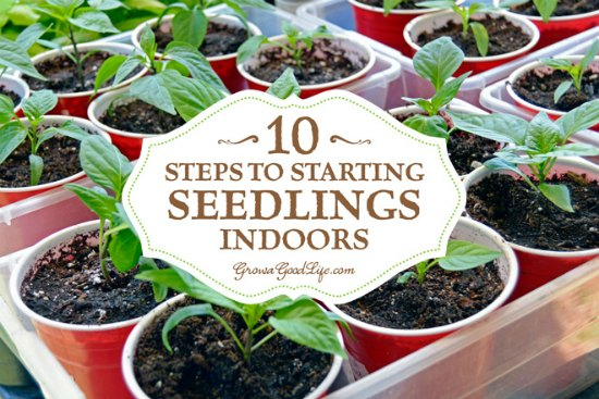 starting-seedlings-indoors
