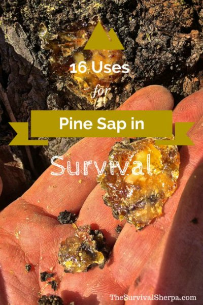 uses-for-pine-sap