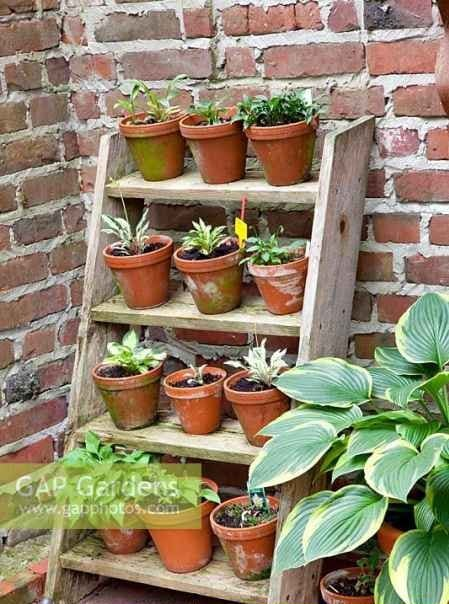 10-ways-to-repurpose-ladders-around-the-homestead