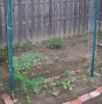 12-creative-wire-mesh-projects-for-the-home-and-garden