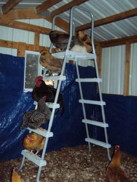 16-ways-to-repurpose-ladders-around-the-homestead