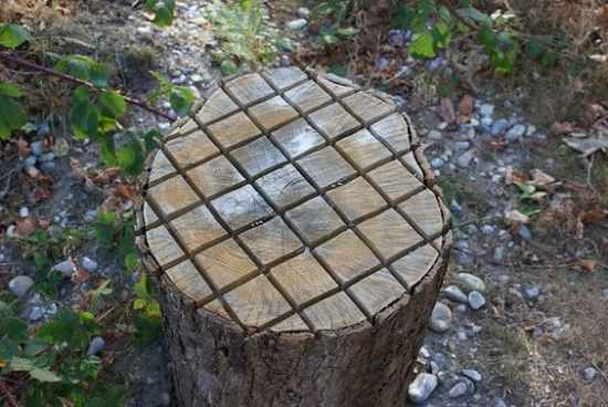 18-practical-ways-to-repurpose-tree-stumps