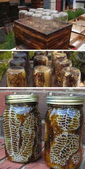 3-best-diy-beehive-plans-and-ideas-for-sustainable-honey