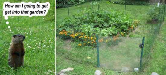 15 Most Effective Ways To Deter Critters From Your Property