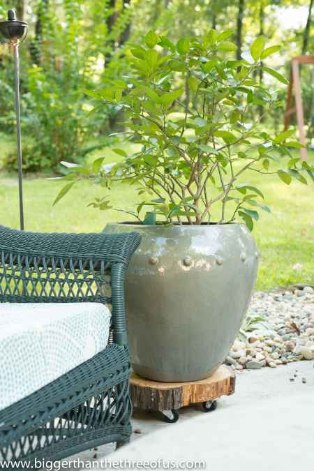 8-practical-ways-to-repurpose-tree-stumps